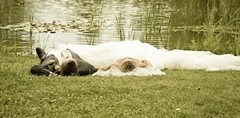 wedding love liebe amore paare heiraten impressionen mineo (359)